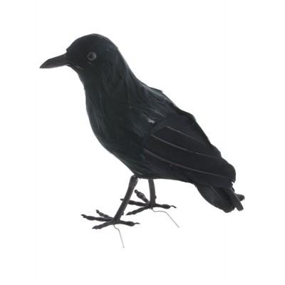 Černý havran 22 cm