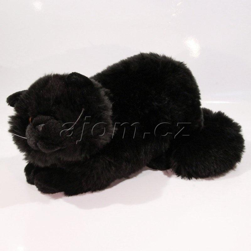 černá a krásná kočička latinské stříkání