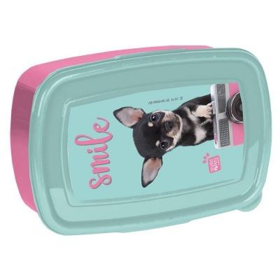 Svačinový box krabička na oběd Pejsek čivava s foťákem