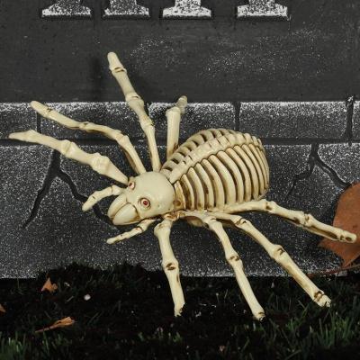 Pavouk kostlivec 24cm