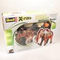 Mamut - anatomický model - Revell